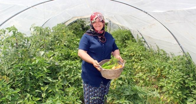 Hataylı kadın çiftçi, organik tarımı için, organik gübre üretti