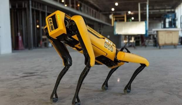 Koyun güdebilen robot köpek satışa çıktı! İşte fiyatı