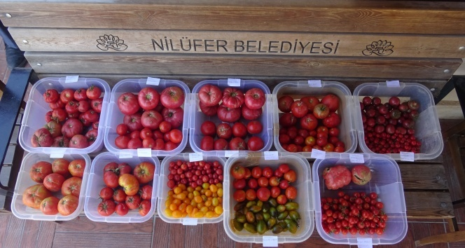 Kent Bostanları'nda 34 çeşit domates, 24 çeşit biber üretildi