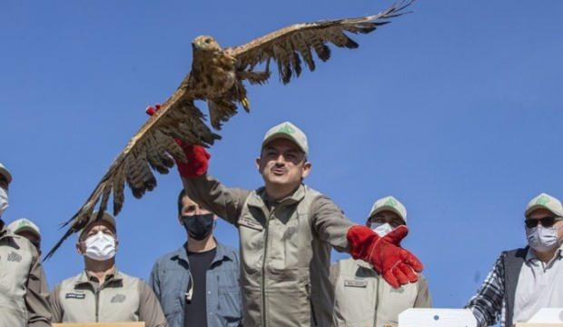 Bakan Pakdemirli, rehabilite edilen yaban hayvanlarını doğaya bıraktı